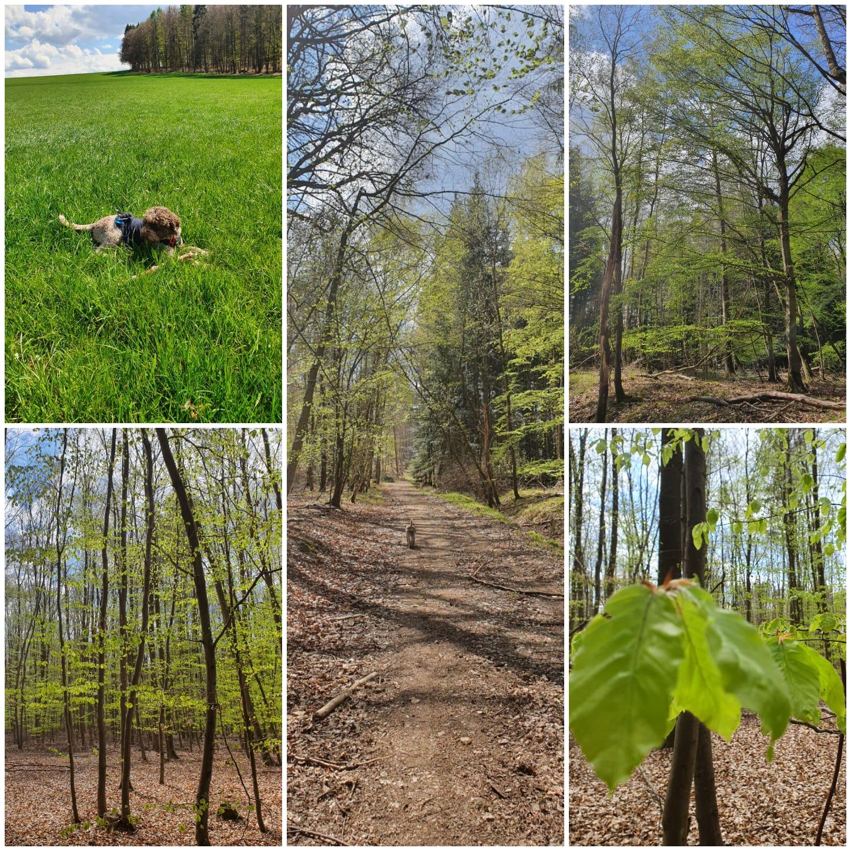 Paula im Frühlings-Wald