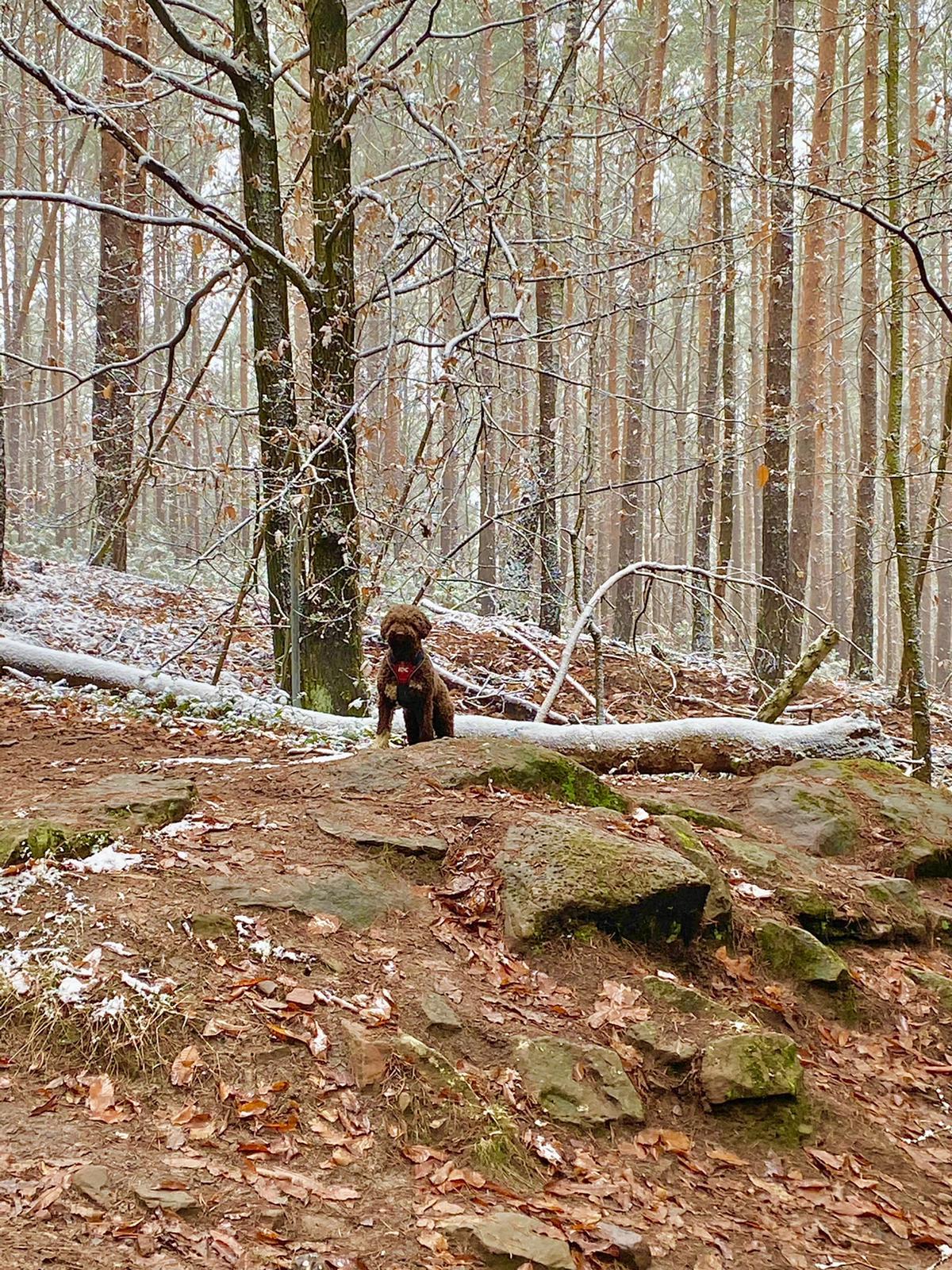 der König des Pfälzer Waldes schickt Neujahrsgrüsse