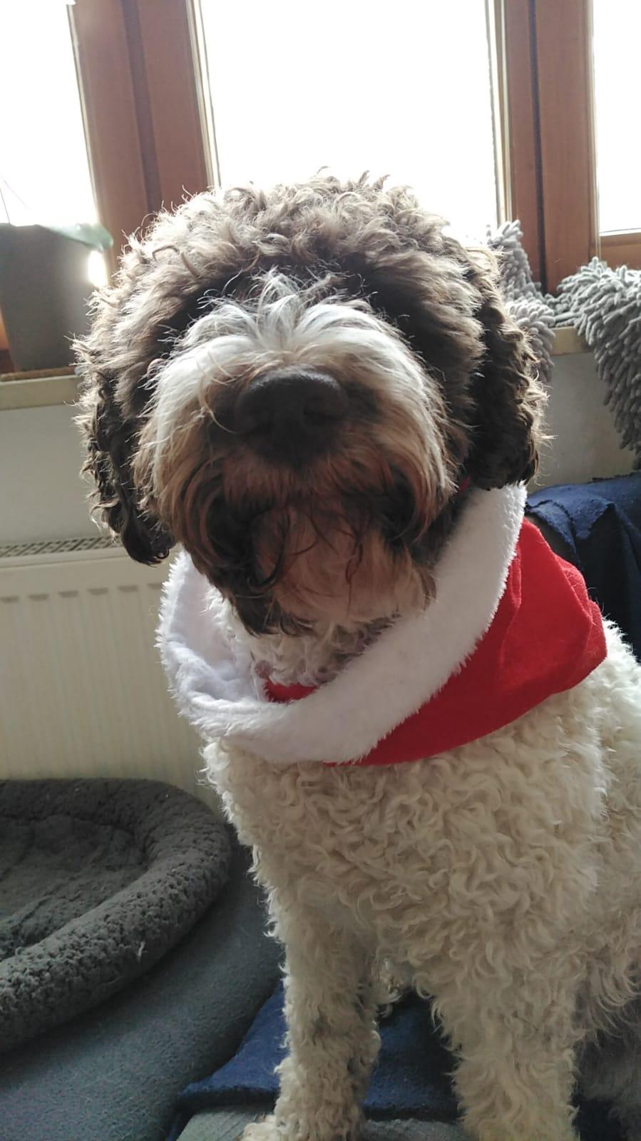Merry Christmas vom Dorle
