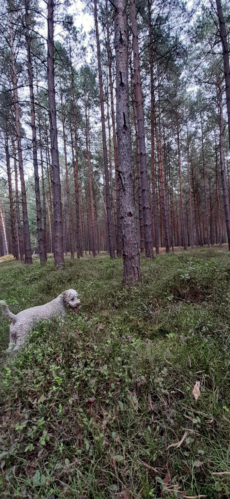 stöbern im Wald