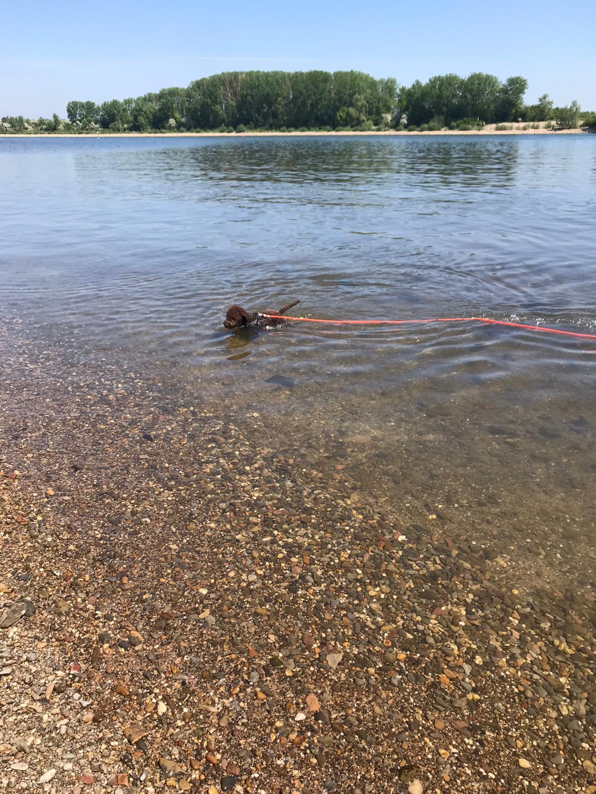 Charlie beim Schwimmunterricht