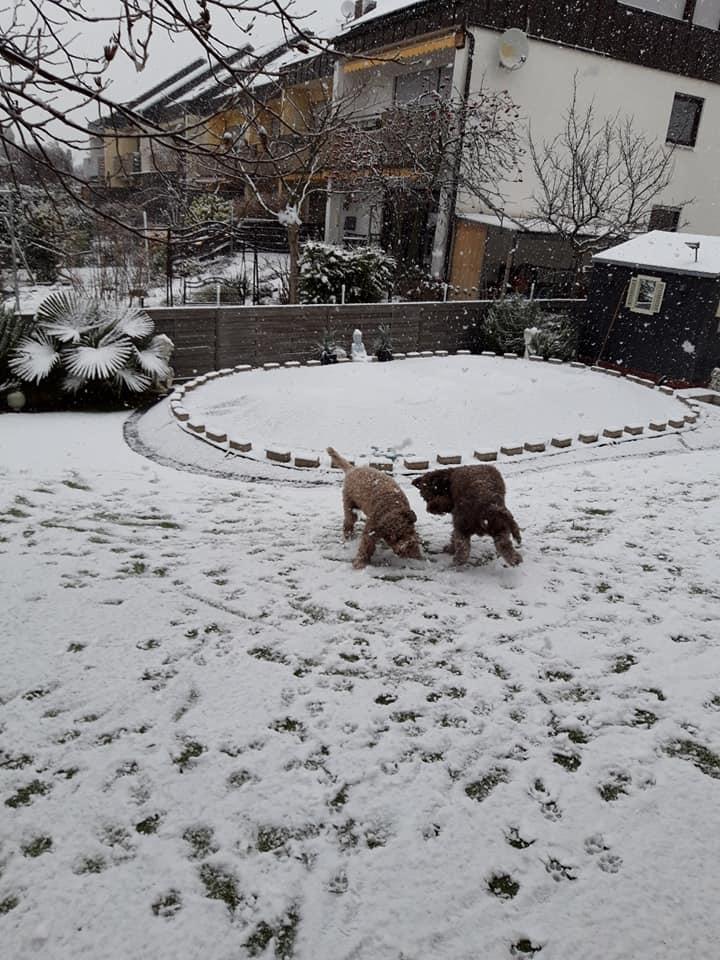 Avanti und Amaretto spielen im Garten