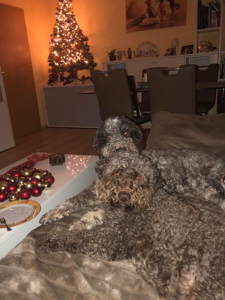 Ringo und Amarena wünschen frohe Weihnachten