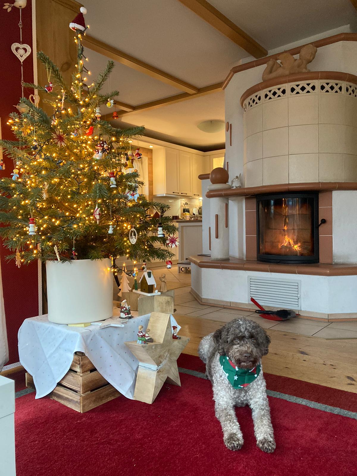 Paula bewacht den Baum - Merry Christmas