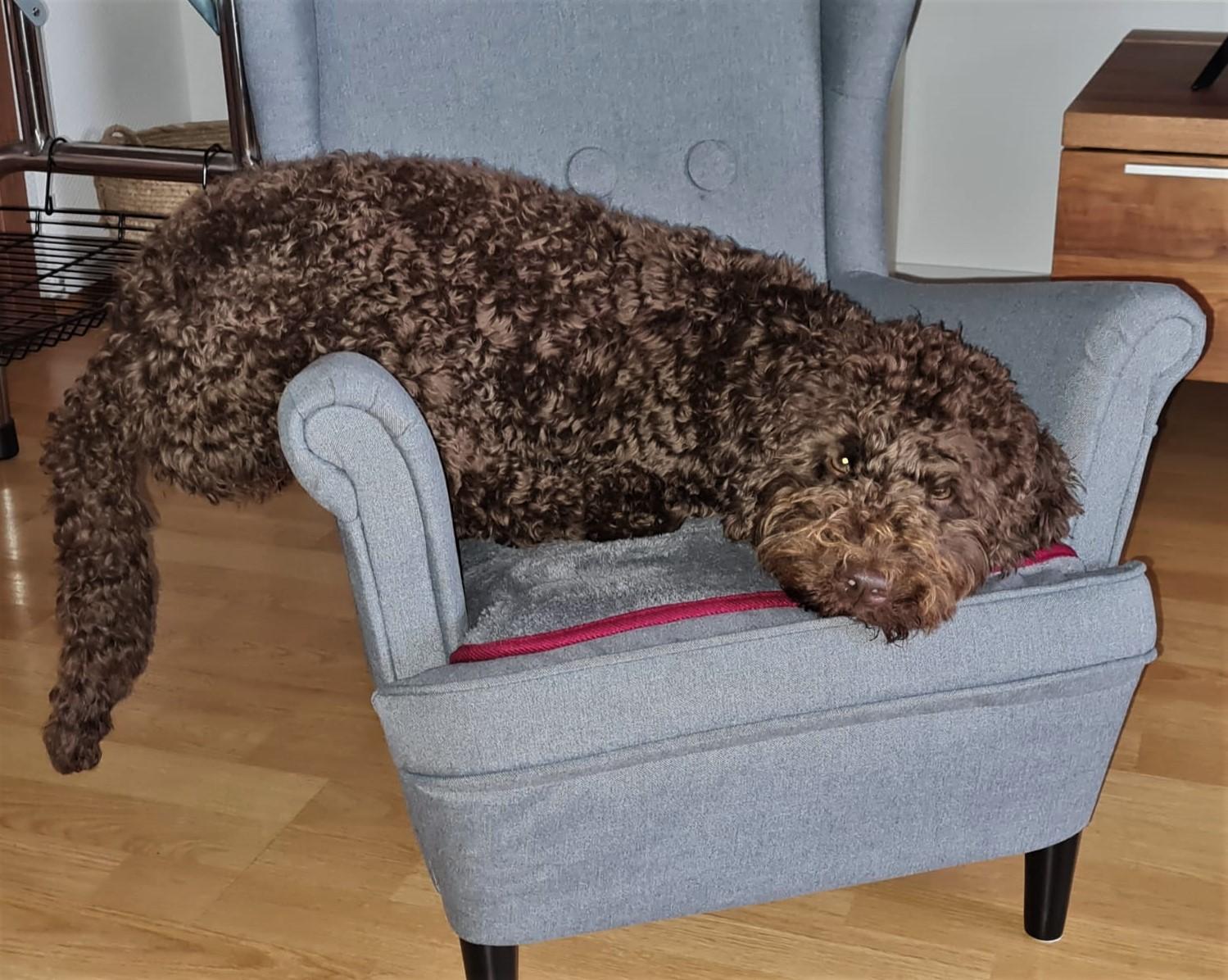 Maggy´s Sessel gefällt mir viel besser ...