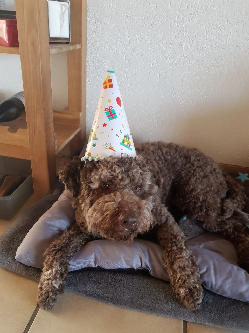 Happy Birthday Avanti