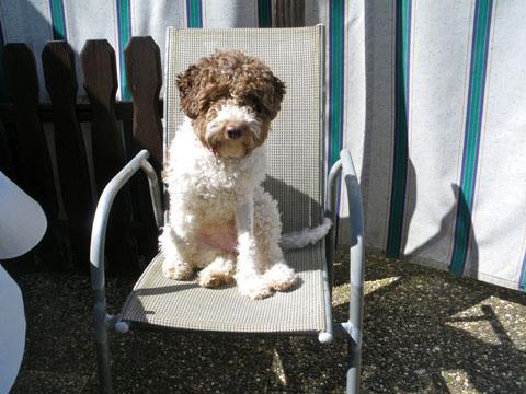 ich sitze nicht auf dem Stuhl !