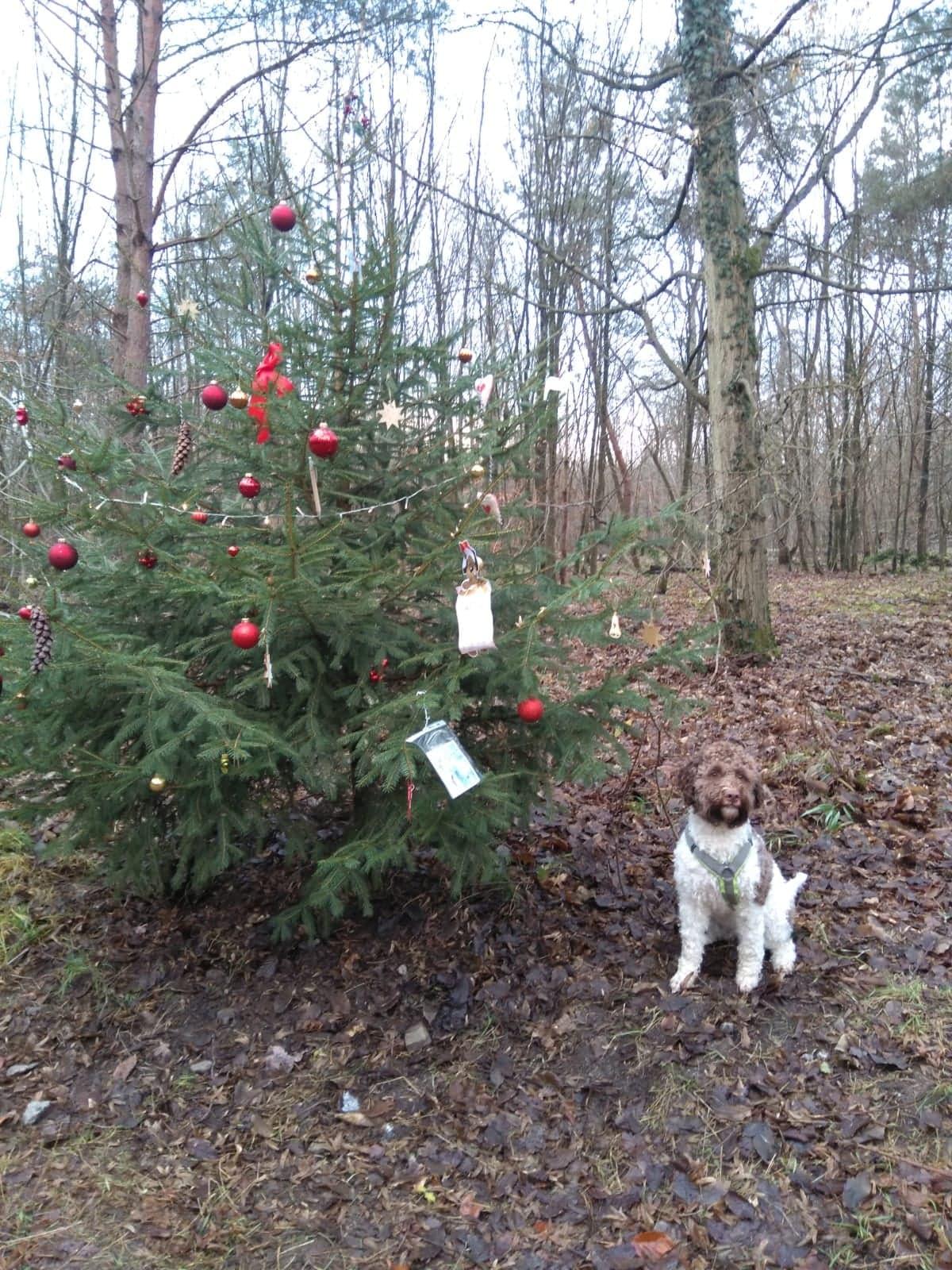 Lotti findet einen Weihnachtsbaum im Wald