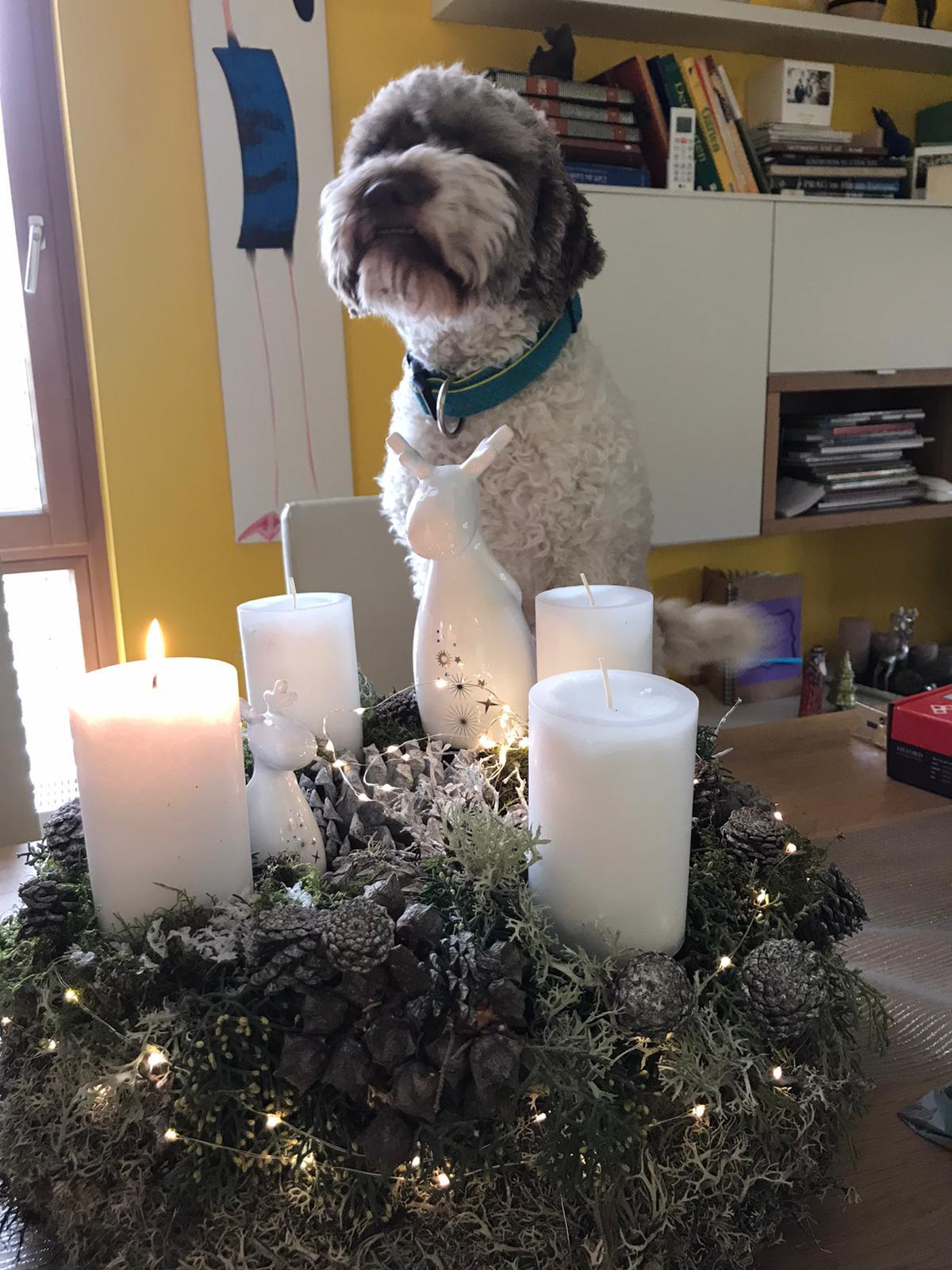 Fina wünscht eine schöne Adventszeit