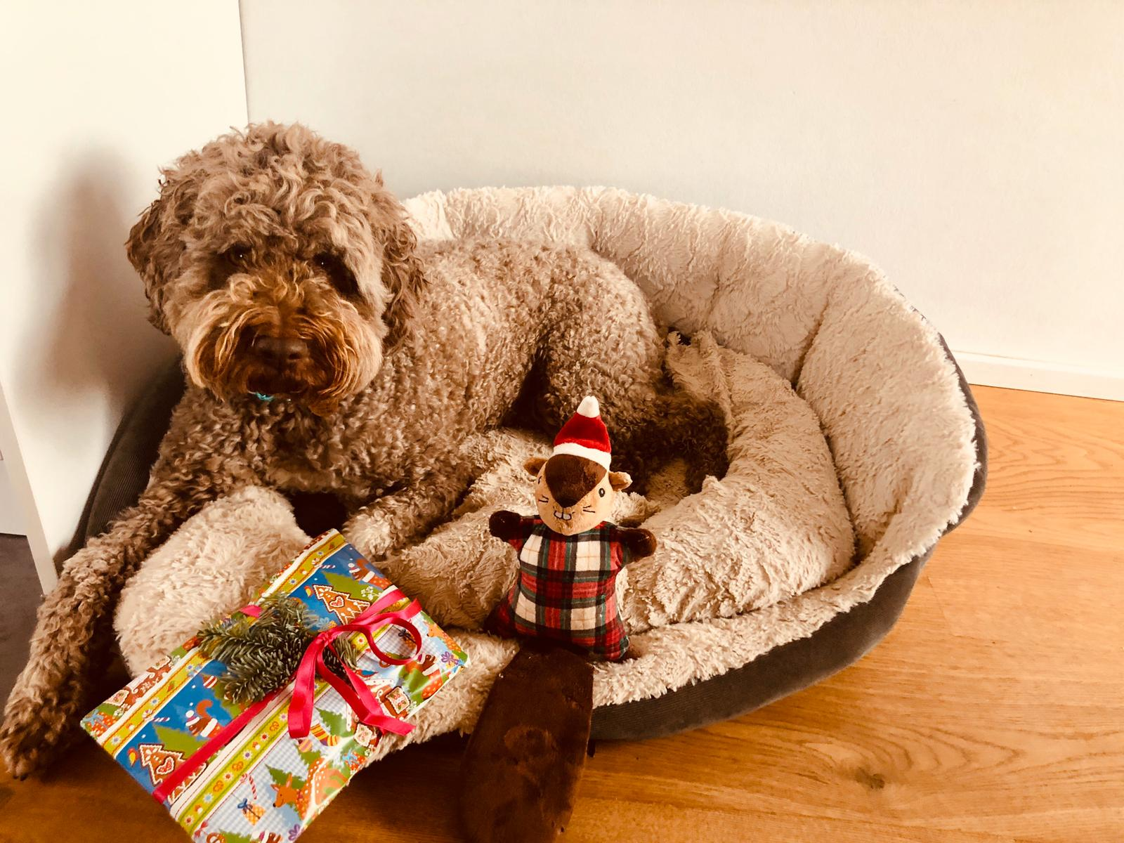 frohe Weihnachten lieber Bob