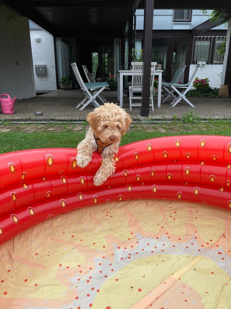 mein Pool