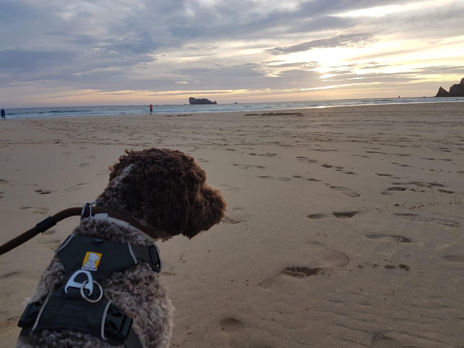 und Bo macht Urlaub in der Bretagne