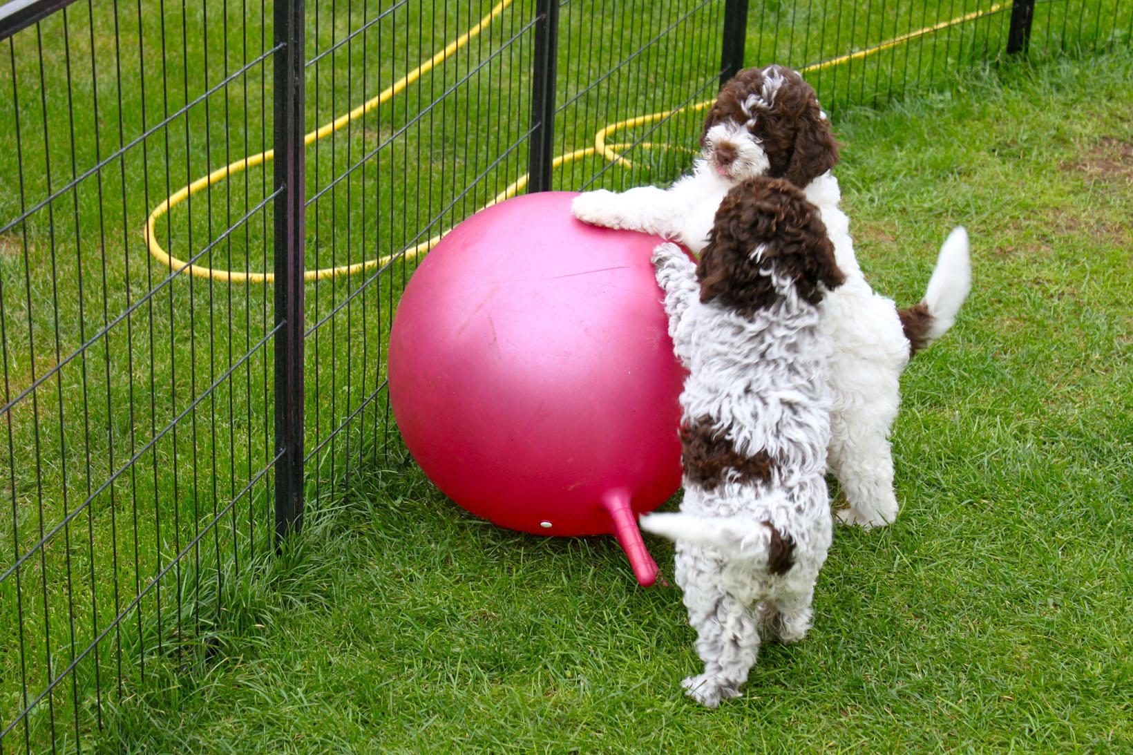 ein Riesenball
