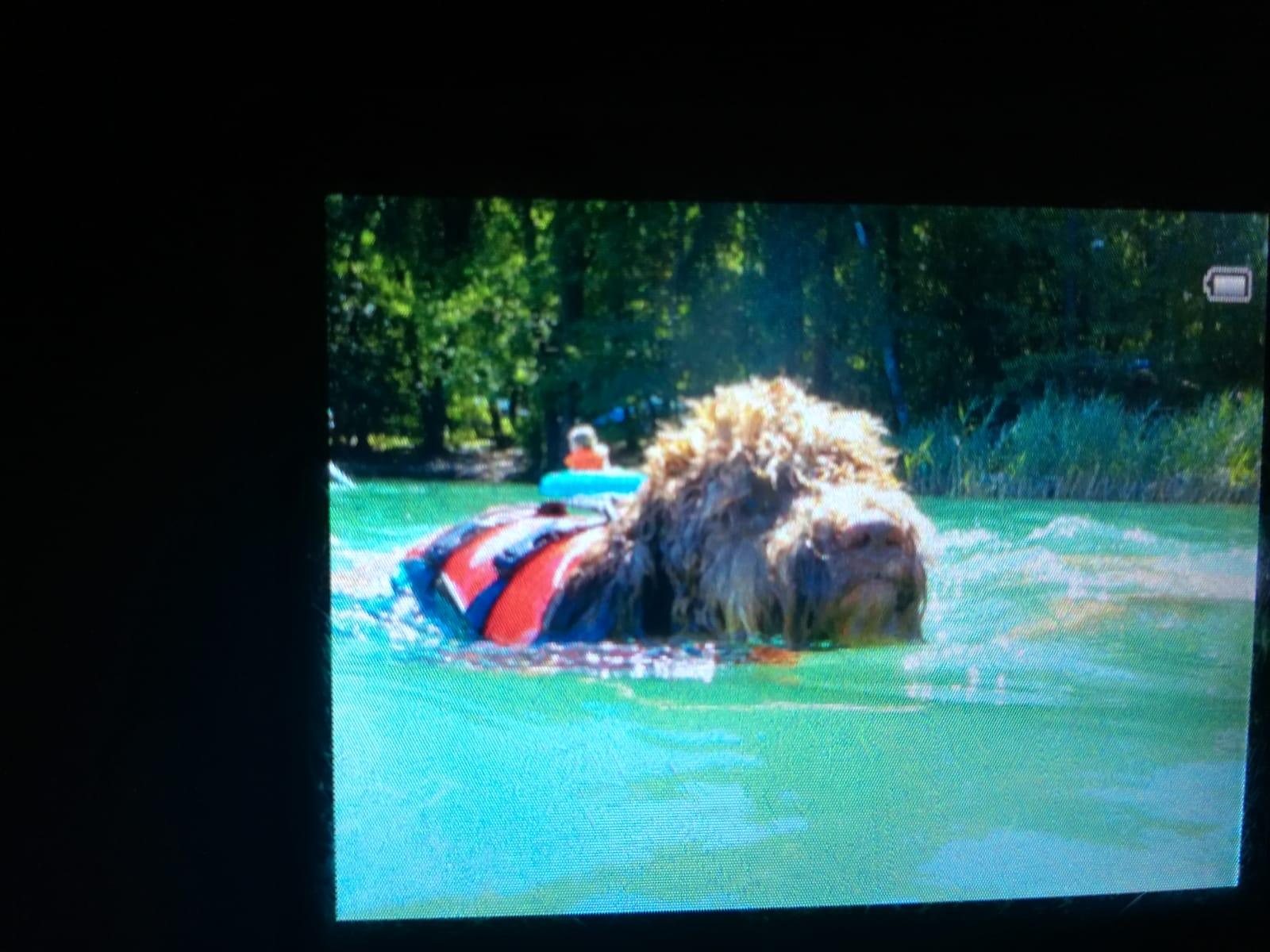 Nelly nimmt den See zur Abkühlung