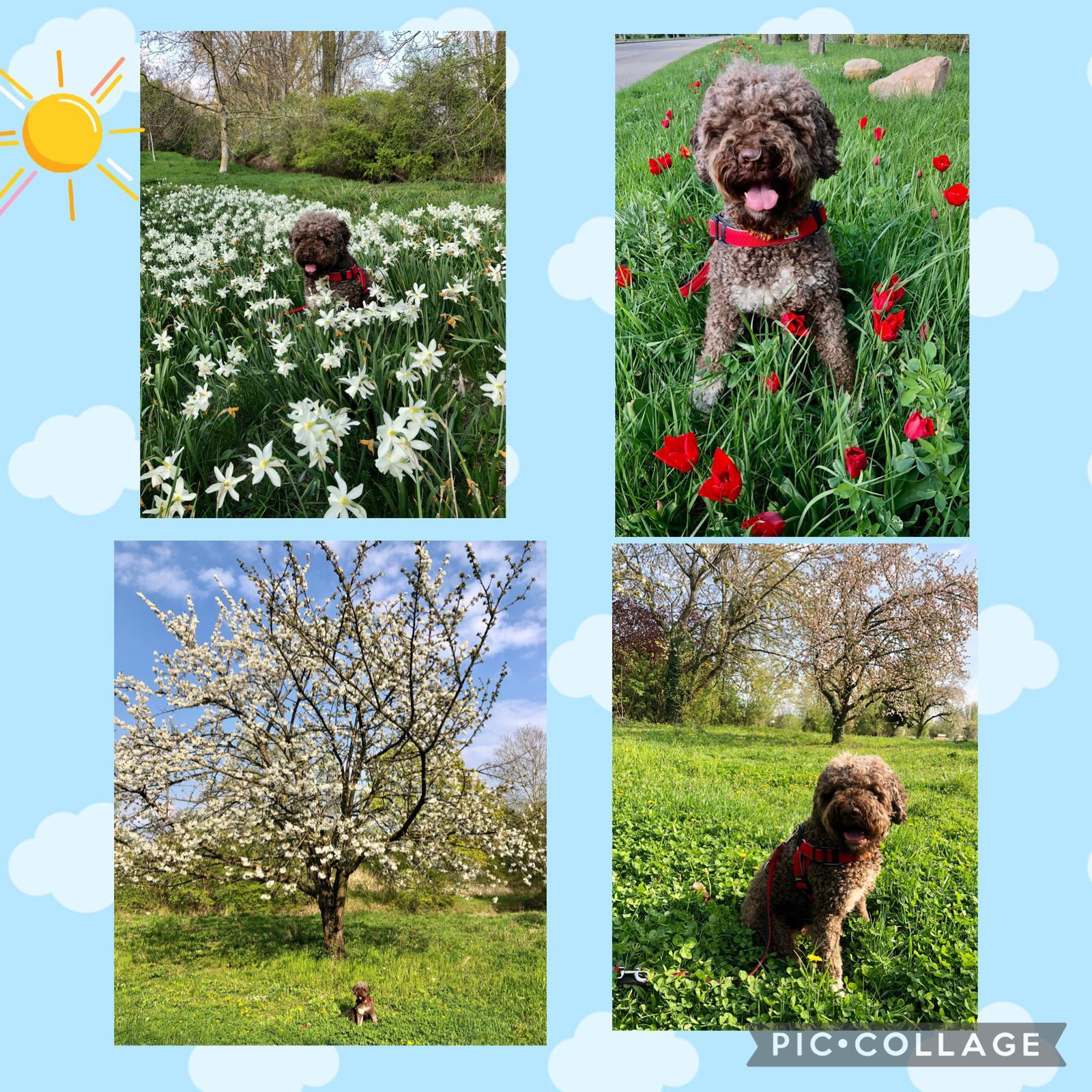 Charlie im Frühling