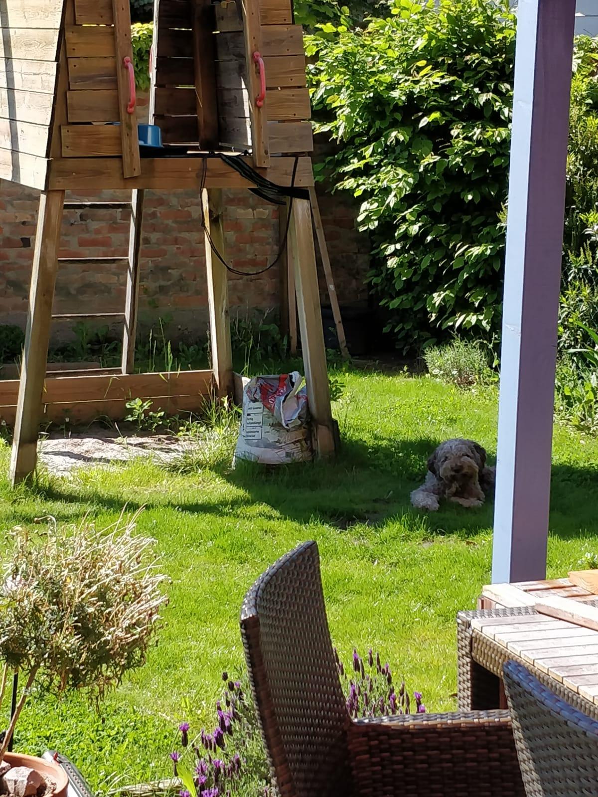 Calimero, mein Garten, mein Schatten