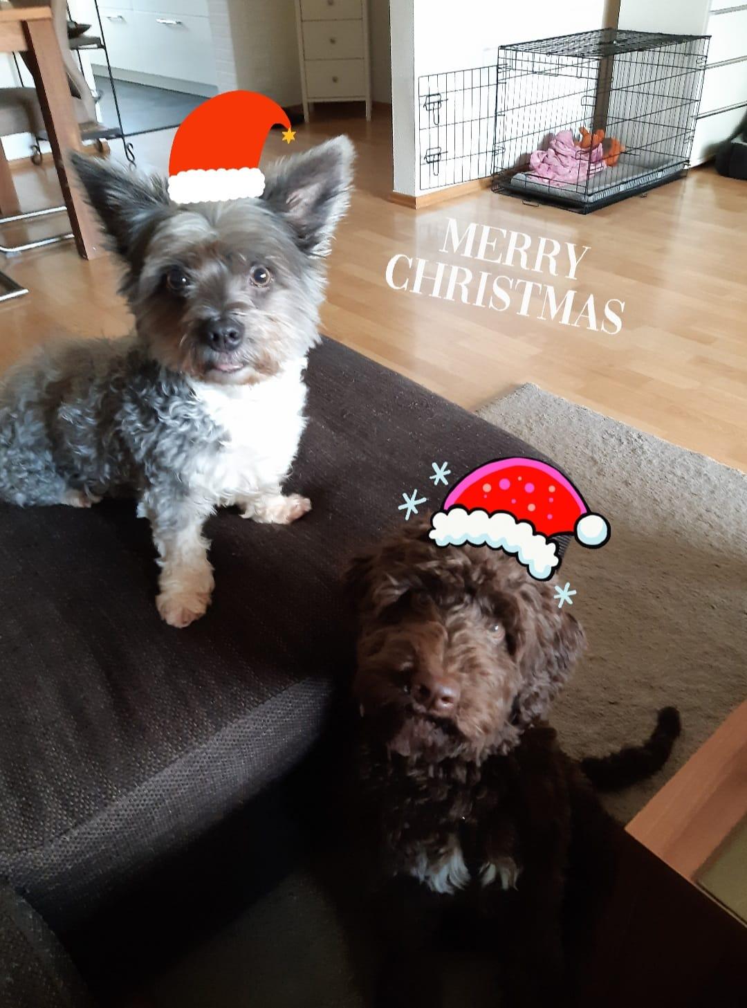 Bella und Maggy wünschen frohe Weihnachten