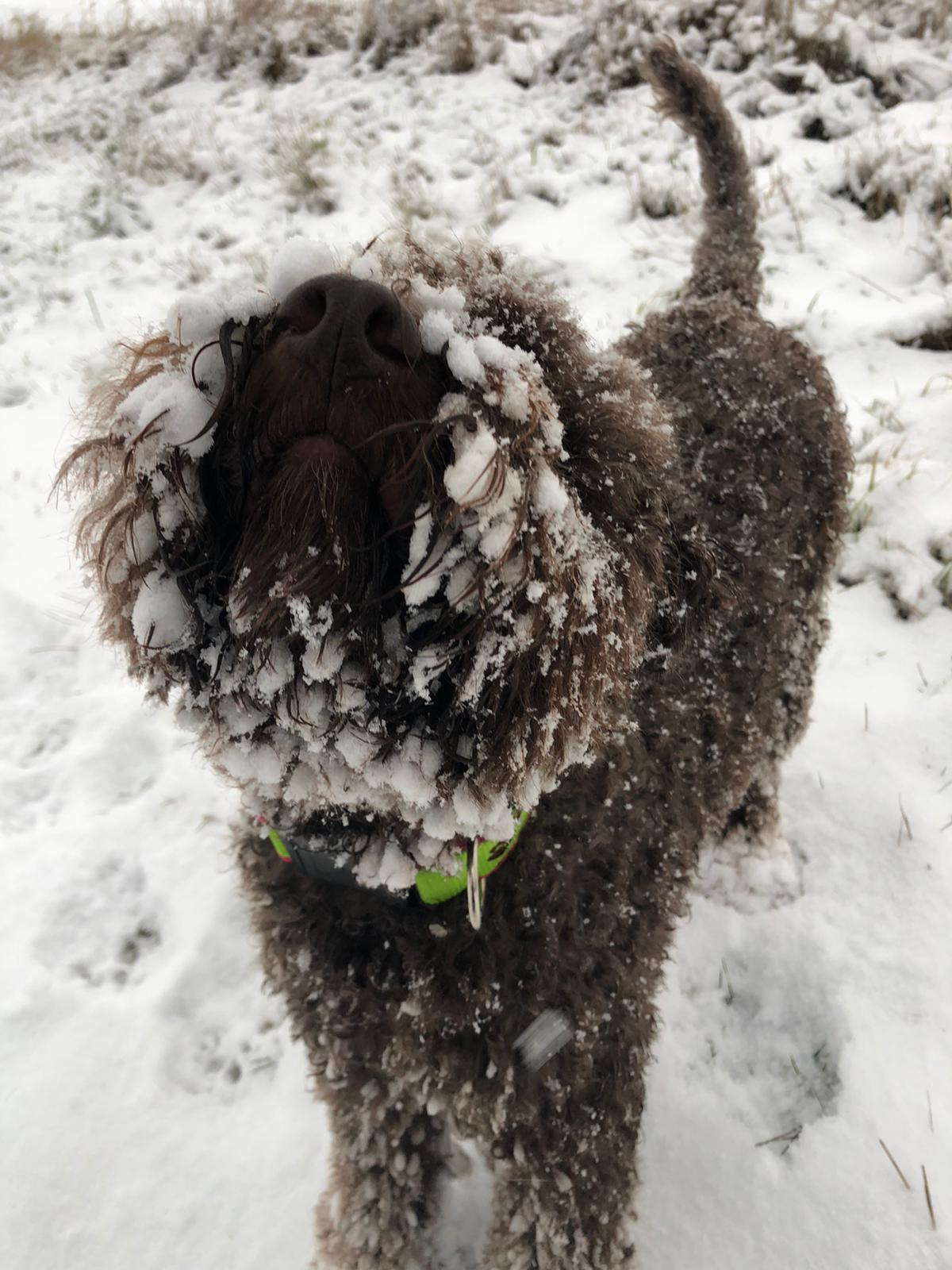 Amarena schickt Neujahrsgrüsse aus dem Schnee