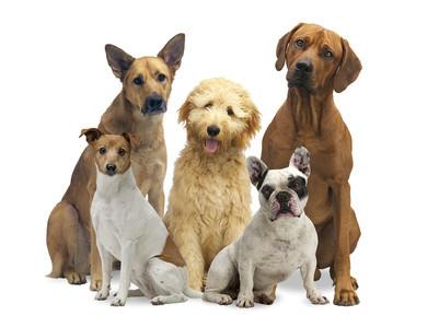 Dier Vorteile einer artgerechten Tiernahrung mit Pet-Fit