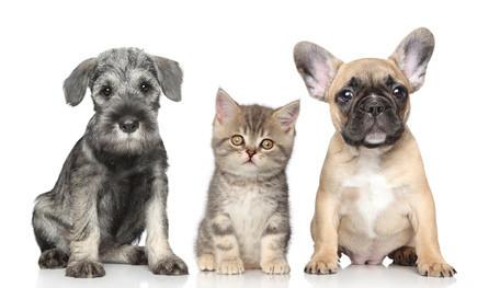 Pet-Fit artgerechte Tiernahrung für Hunde und Katzen
