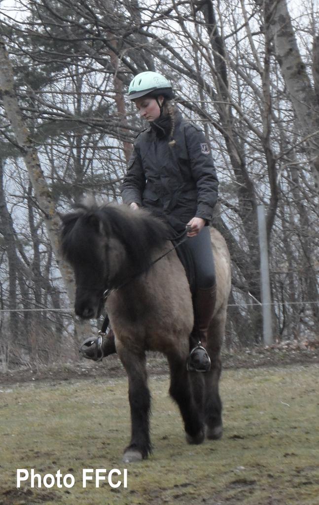 Stage d'équitation : comment travailler son cheval en extérieur