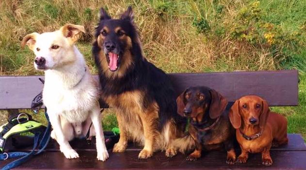 Max,Archell,Kalle und Elli ( Jamnik´s Niccolina )