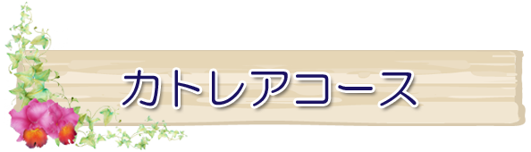 カトレアコース(シルバー世代60才以上)