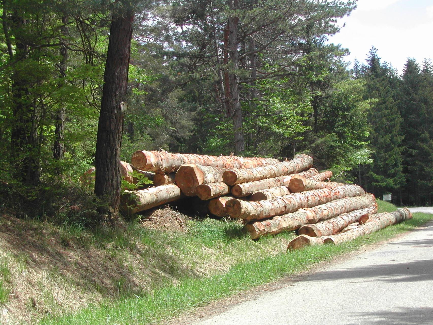 Exploitation forestière, un débouché économique des Pyrénées audoises
