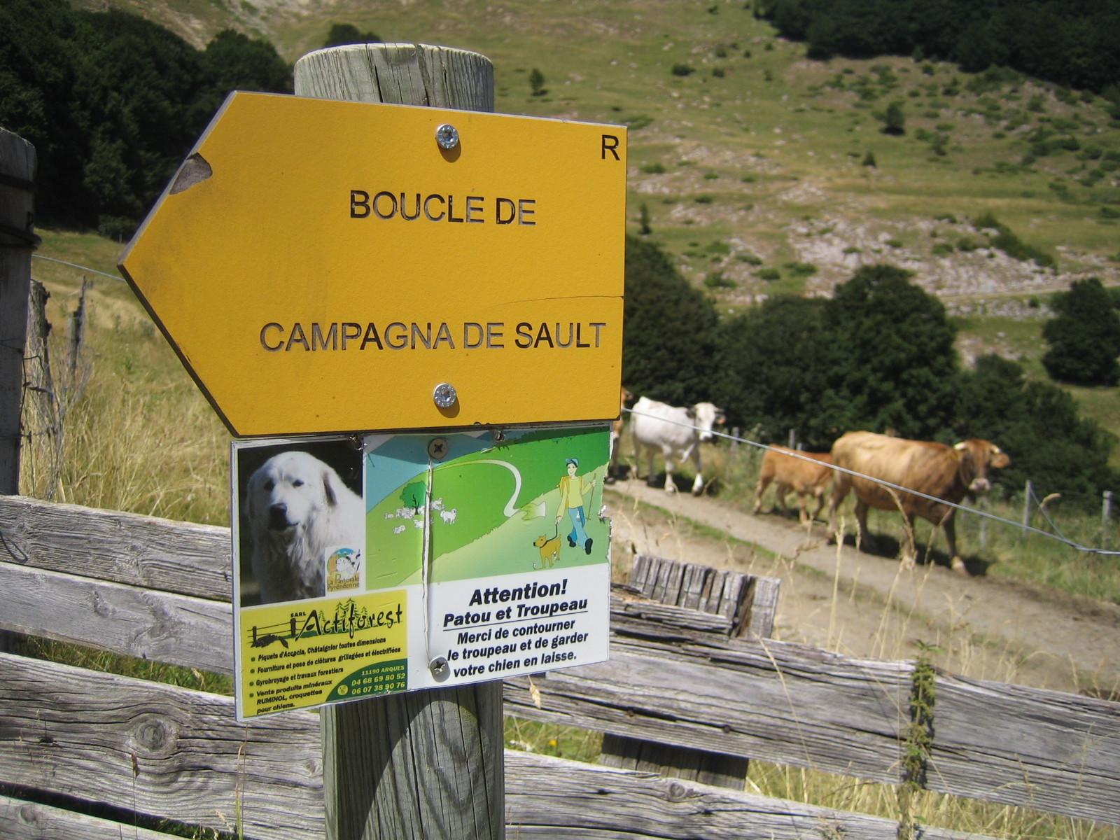 """Mise en garde à proximité d'une bergerie - présence de chiens de bergers """"patous"""""""