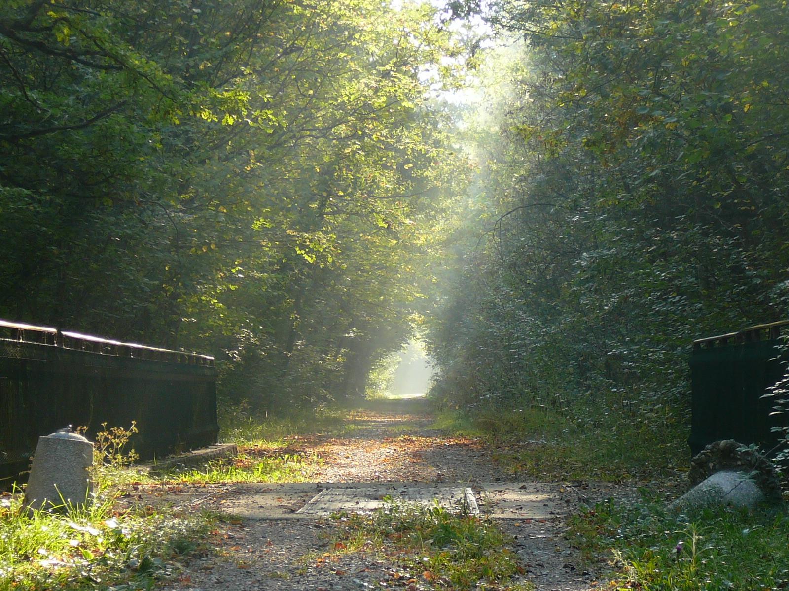 une voie en sous-bois