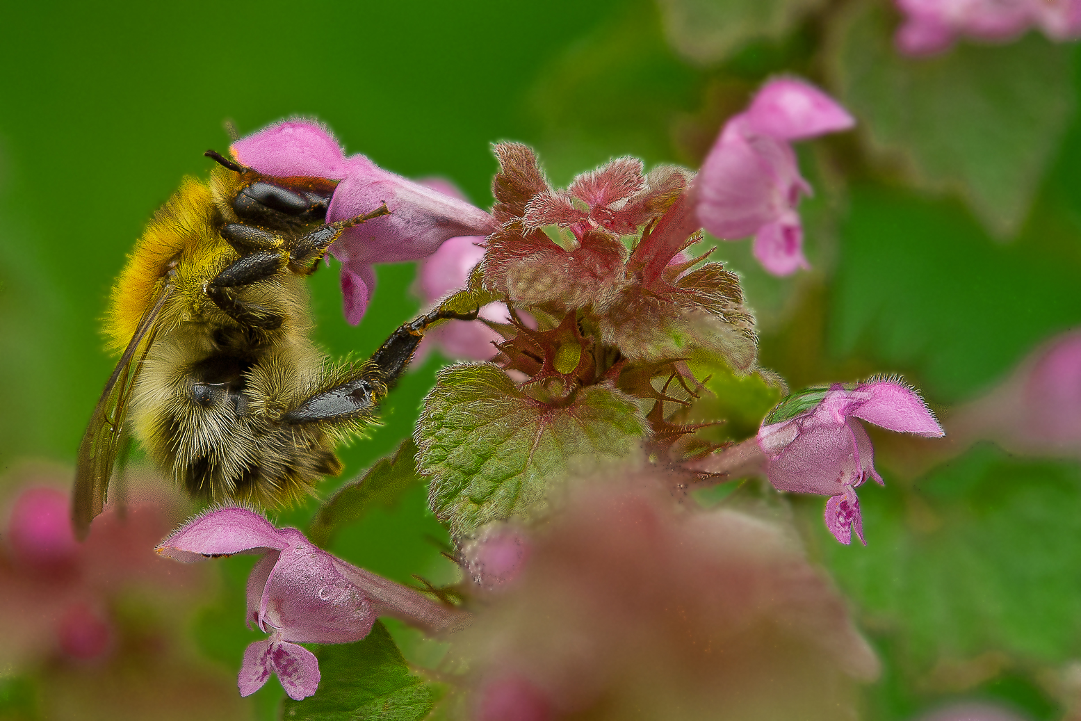 Das Bienchen und die Nessel