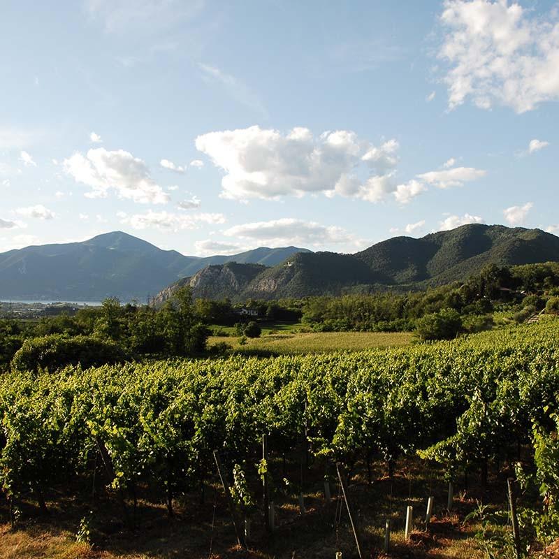 Wein ist der Protaganist am Iseosee