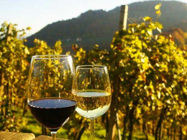 Weinproben von Bio bis Bolgheri