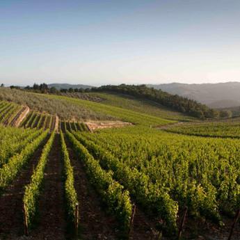 Seit jeher kommen Spitzenweine aus Sizilien-wir organisieren Ihnen gerne eine Weinprobe