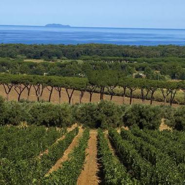 Bolgheri- die besten Weine der Toskana