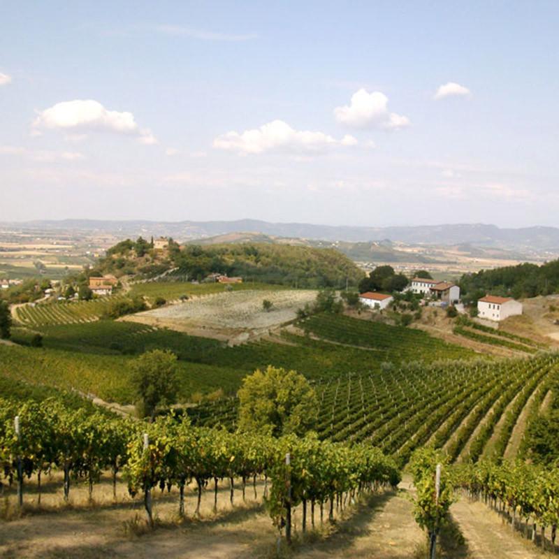 Die Euganeischen Weinberge