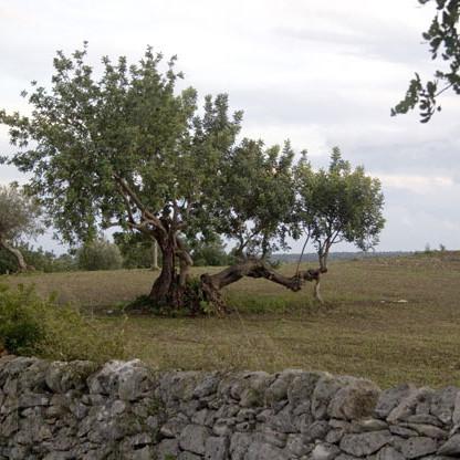 Herbe Schönheit Siziliens ist unwiderstehlich