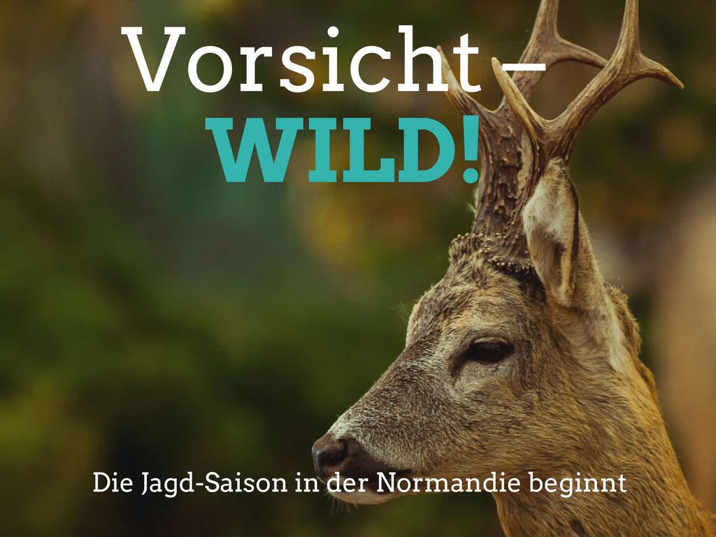 Urlaub mit Hund in der Normandie: Jagdsaison von Ende September bis Ende Februar