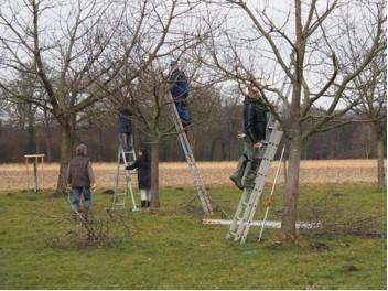 Obstbaumschneidekurs durchgeführt für Obstkelterei van Nahmen