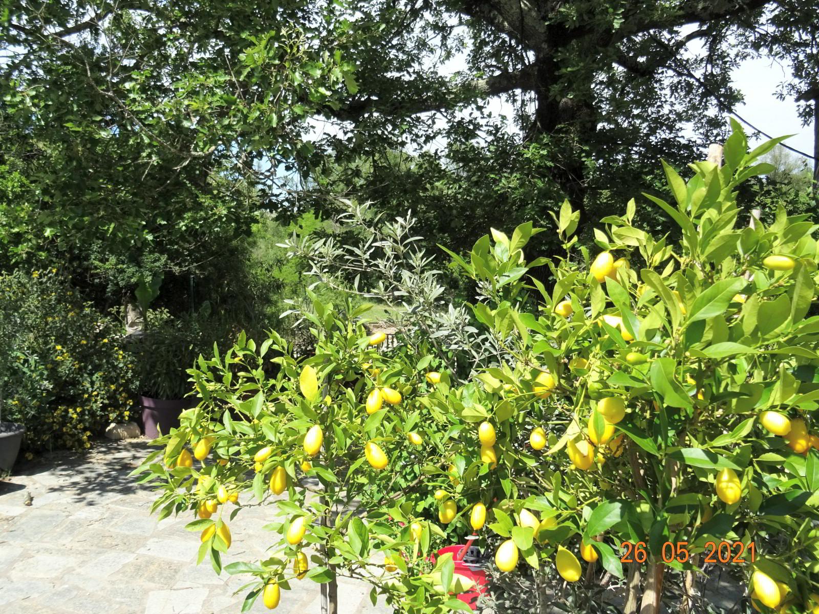 Végétation exotique