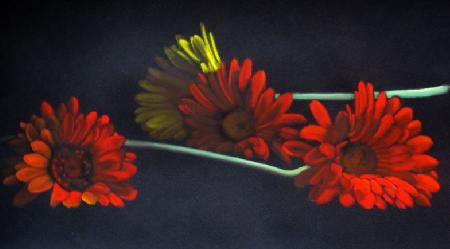 Marina Guarino - Gerbere - matita su carta - 70 x 50