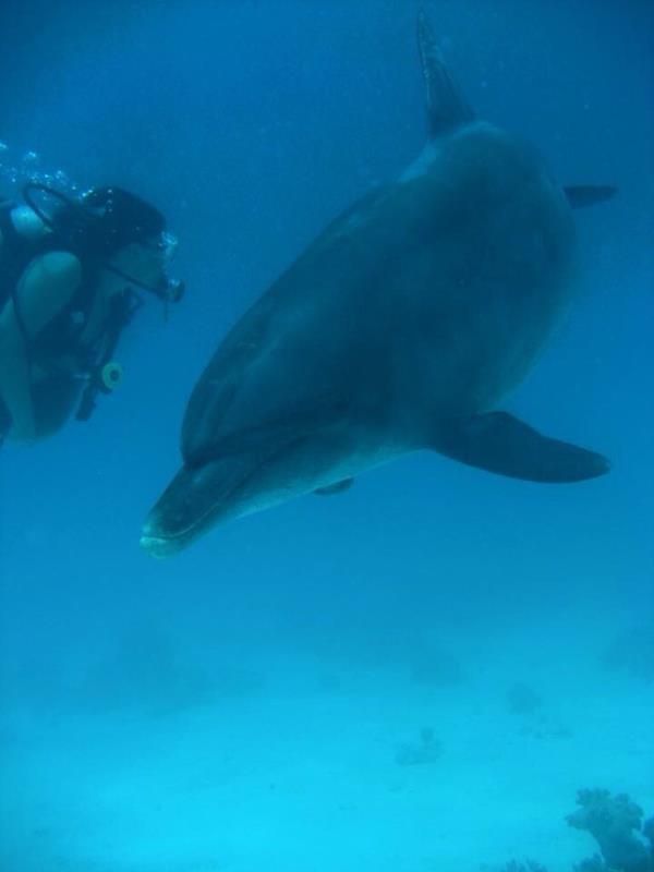 Delphin und Taucherin Auge in Auge