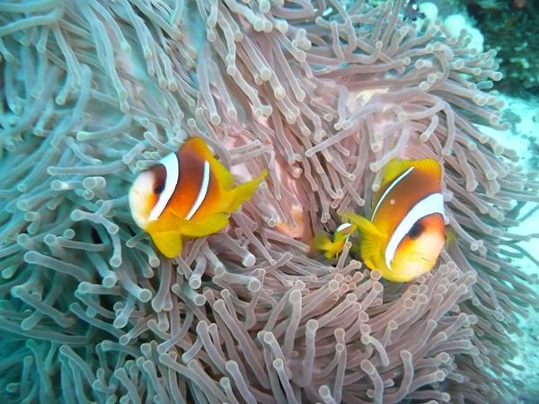 Nemos als Paar zusammen
