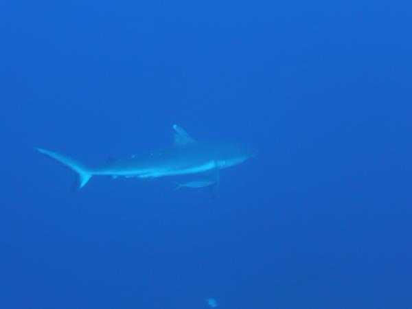 Hai zu Besuch