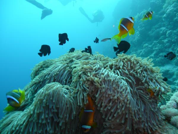 Anemone und Nemo