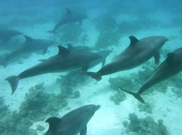 Delphinschule ganz nah