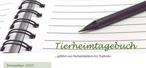 Tierheimtagebuch Winter 2020/ 2021