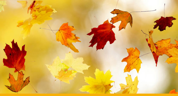 Die Blätter beginnen zu fallen