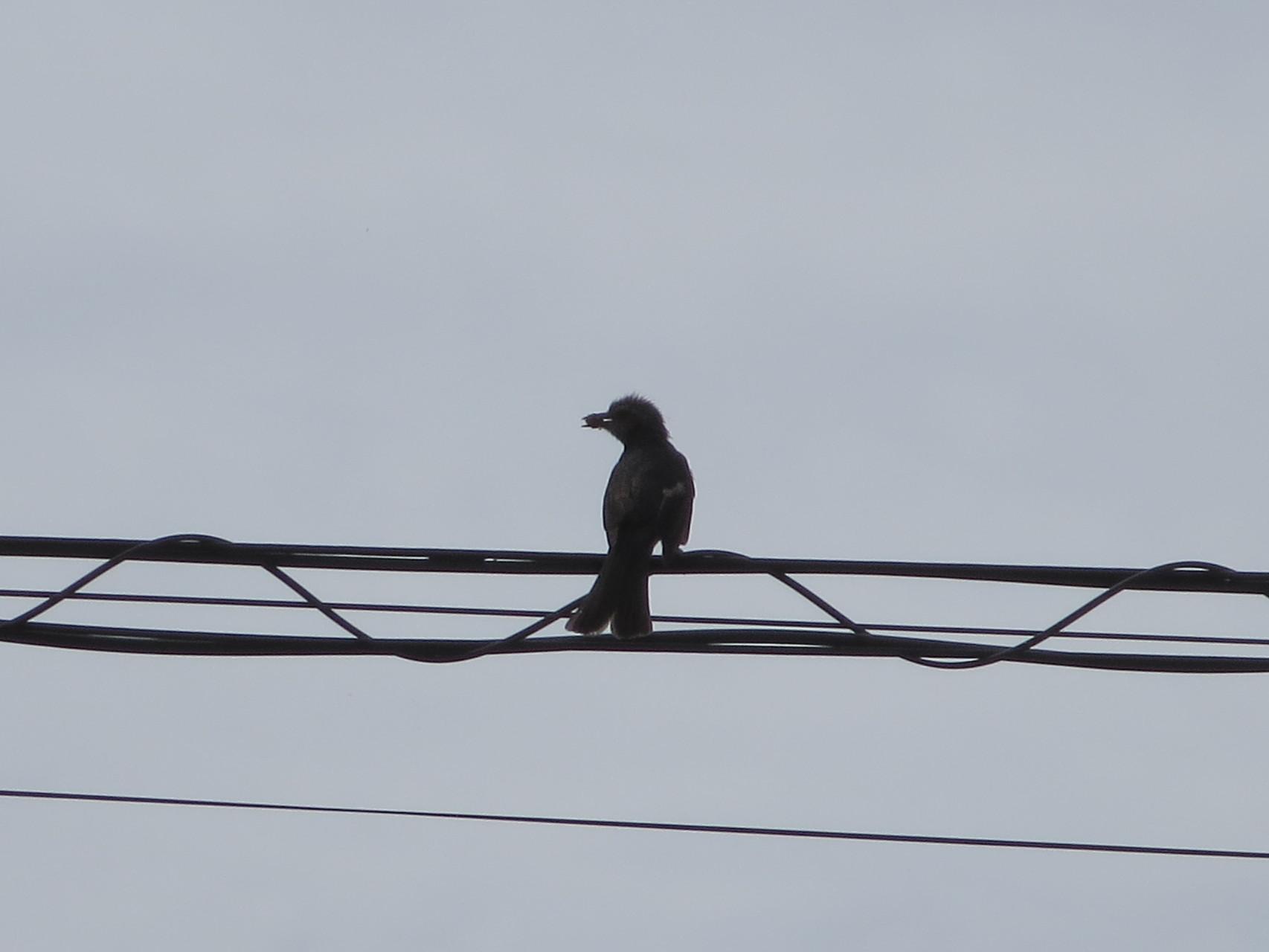 2015年06月19日 親鳥がご飯を加えて巣立ち~羽ばたきを誘って。