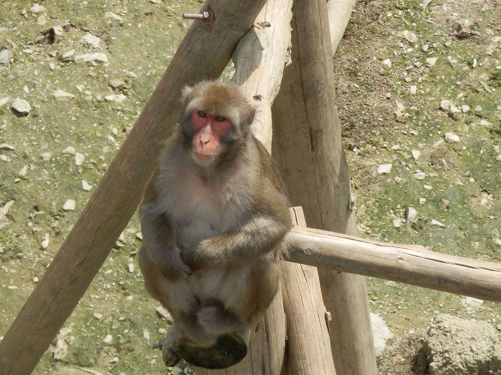 Einer der vielen Affen